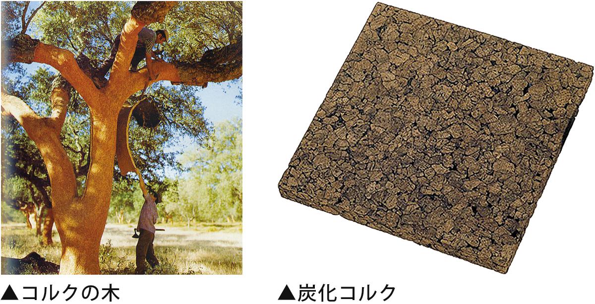 コルクの木・炭化コルク