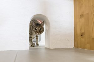 猫と暮らす 猫 漆喰