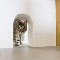 猫通路 しっくい 造作キッチン ペットと暮らす